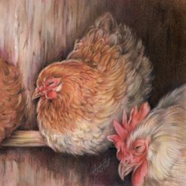 Heerlijk met de kippen op stok