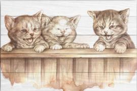 Reproductie katten
