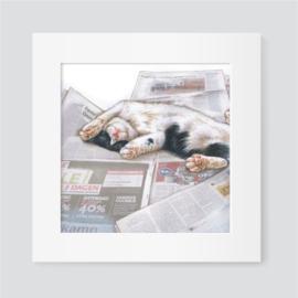Kat met krant