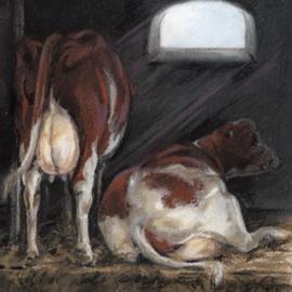 Koeien in stal -  Even bijkomen van het harde werken