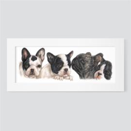 Franse bulldogpups