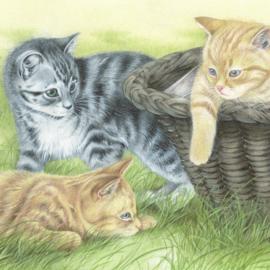 Altijd wel zin in een spelletje. Kittens in de buitenlucht.