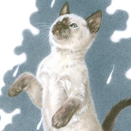 It's raining cat's - Ragdoll