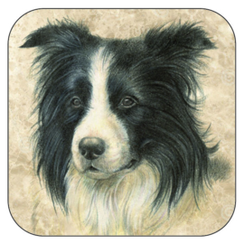 Coaster Border Collie, per 3 pieces
