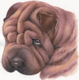 Sorry - Sharpei, per stuk