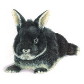 Ook konijntjes zijn van harte welkom...
