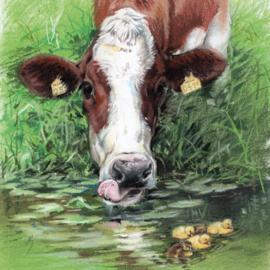 Wie heeft er behoefte aan een oude koe uit de sloot, als ze er gewoon naast staan...