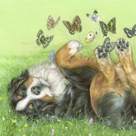 Berner Sennen met vlinders  op/in zijn buik - Valentijns gevoel