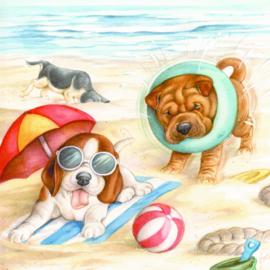 Ook wij liggen en spelen graag op het strand!