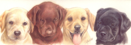 Narrow Postcards - Labrador Retrievers