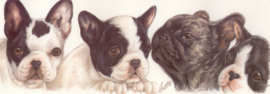 Narrow Postcards  - French Bulldog