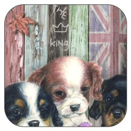 Coaster Cavalier King Charles Terrier, per 3 pieces