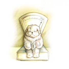 Wachtkamer emotie: gewichtige zaken voor hondje