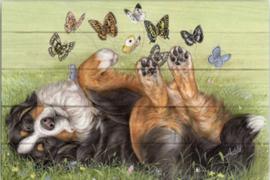 Reproductie Berner Sennen met vlinders