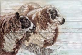 Reproductie geiten/schapen