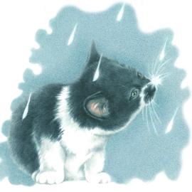 Themakaarten - serie 2 - Cat's in the Rain (4 x 2 kaarten)