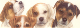 Narrow Postcards - Jack Russel Terrier