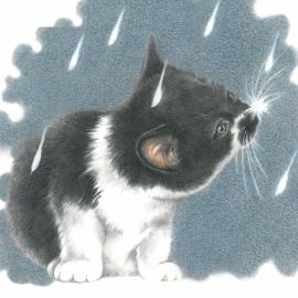 It's raining cat's - Europees korthaar