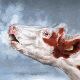 Themakaarten - serie 4 - Koeien loeien (4 x 2 kaarten)