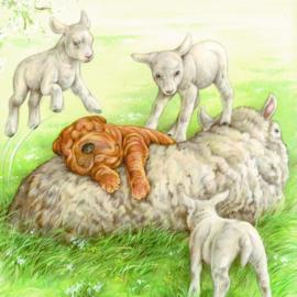 Ligt echt heerlijk zo'n schapenwollen vachtje.