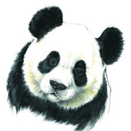 Kijk, met deze Panda valt wel te praten..