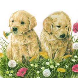 Lekker samen de bloemetjes buiten zetten. Golden Retriever pups in het gras