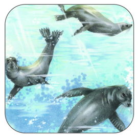 Coaster Seal, per 3 pieces