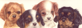 Narrow Postcards  - Cavalier King Charles Terrier