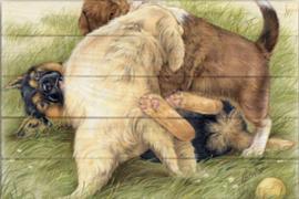 Reproductie Spelende honden