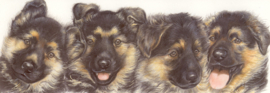 Narrow Postcards  - German Shepherd dog