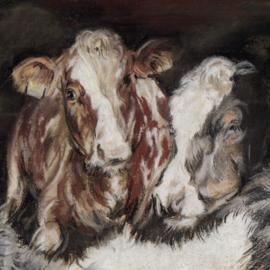 Twee koeien - Kalverliefde