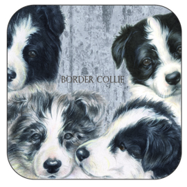 Coaster Border Collie Collage, per 3 pieces
