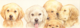 Narrow Postcards  - Golden Retrievers