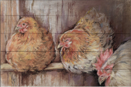 Reproductie: kippen