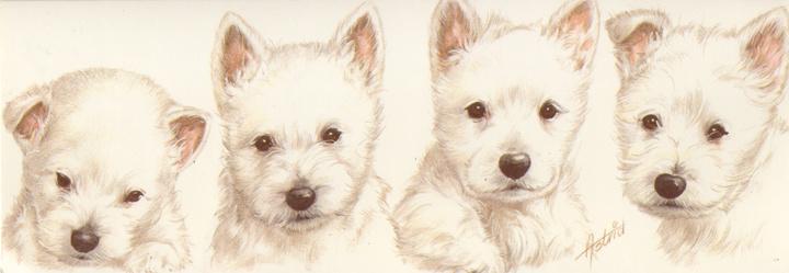 Smalle Kaart: West Highland White Terrier
