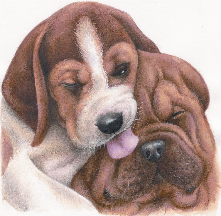 Vriendschap - Beagle met Sharpei, per 2 stuks
