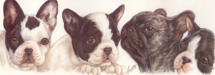 Smalle kaart: Franse Bulldog pups