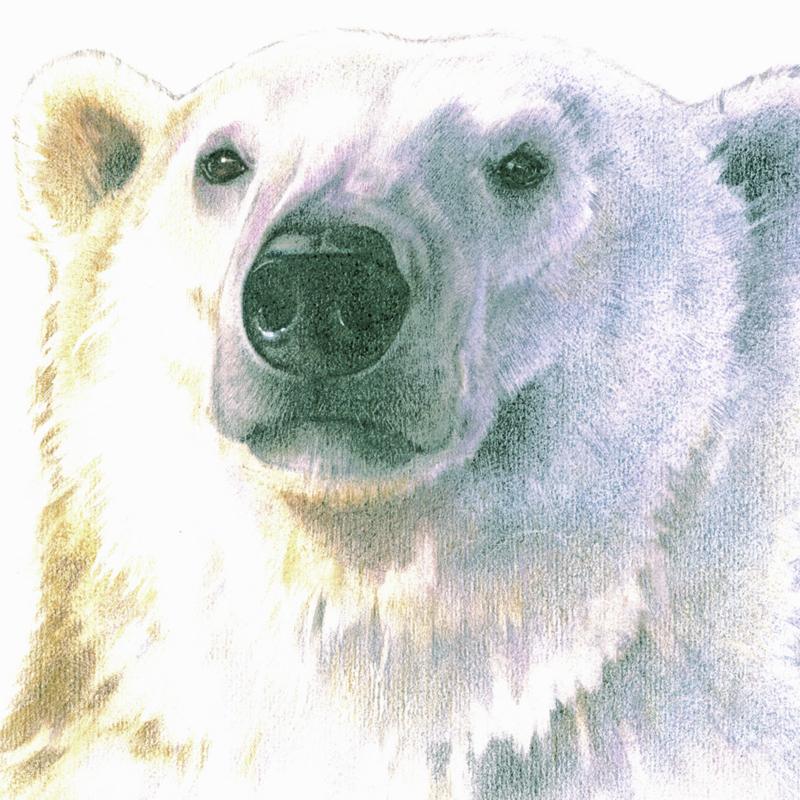 IJsbeer, zelfportret