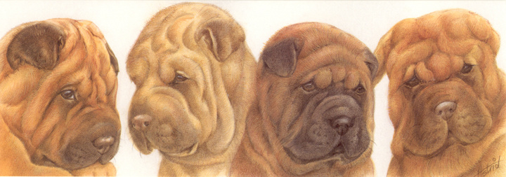 Smalle kaart: Sharpei puppies