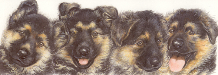 Smalle kaart: Duitse Herder pups
