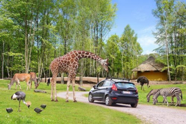 Safaripark Monde Sauvage