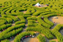 Het labyrint van Barvaux