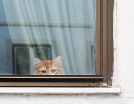 shy cat Lissabon
