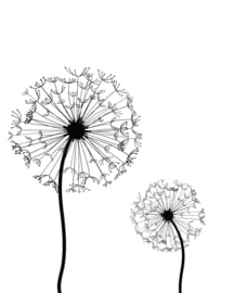 3 Luik Paarden bloemen 3 x 40 x 50