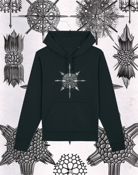 Haeckel Sweater: Acanthophracta