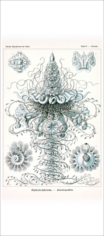 Tafel 37: Discolabe