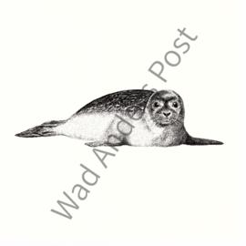 Ansichtkaart de Zeehond