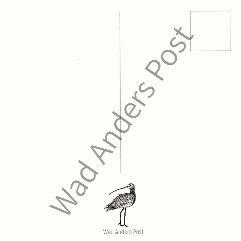 Ansichtkaart de Wulp