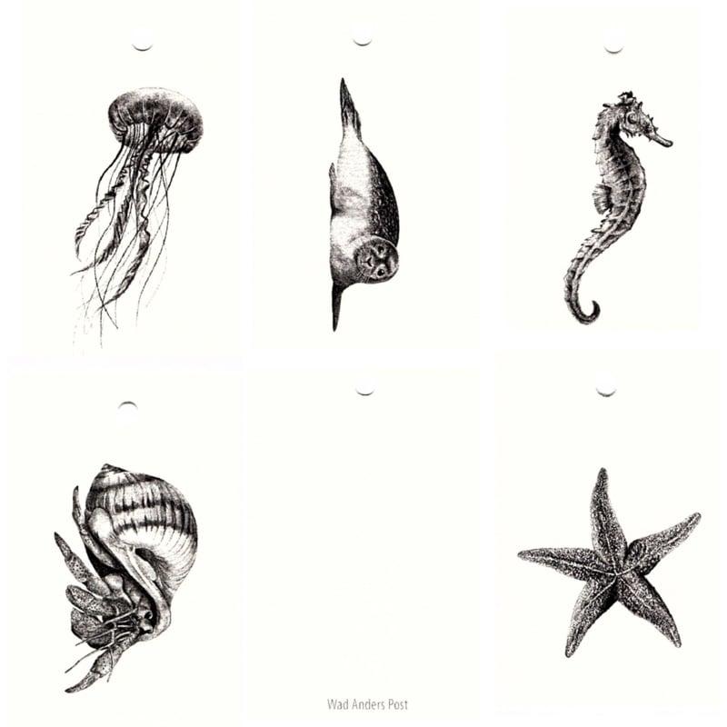 Zeedieren, set van 5.