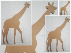 Giraf, diverse maten